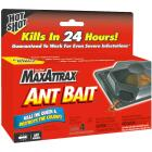 Hot Shot MaxAttrax 0.28 Oz. Solid Ant Bait Station (4-Pack) Image 1